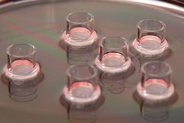 Phenion OS-REp epidermal model in Air-Liquid Interface culture
